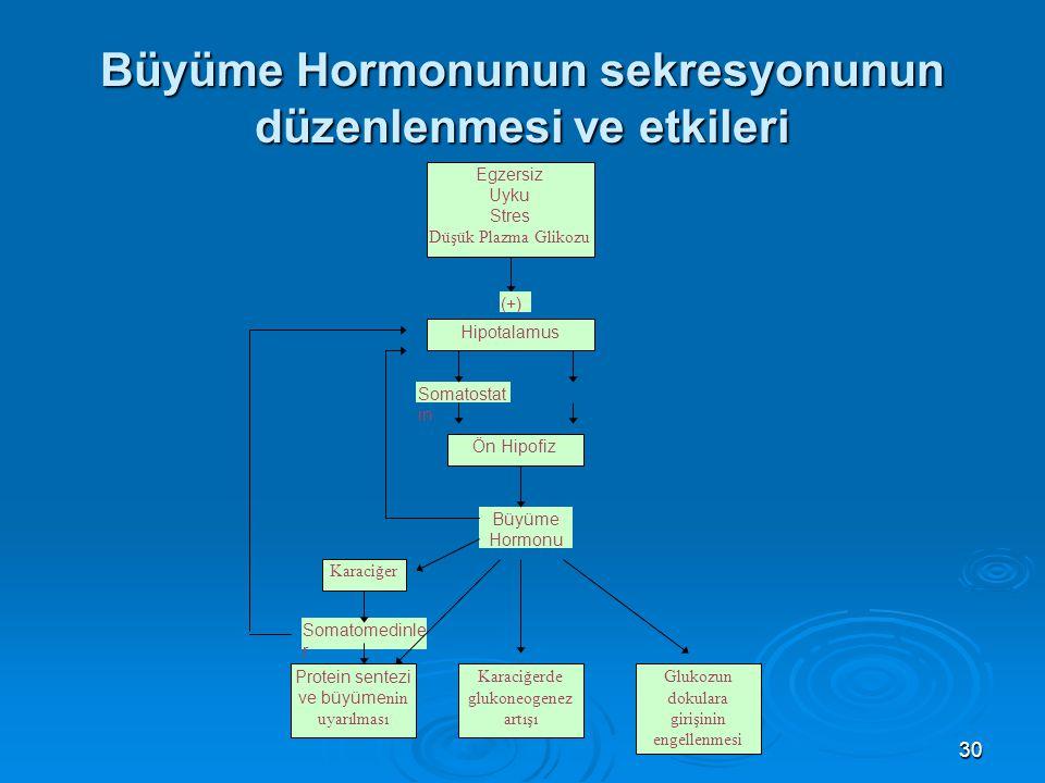 Büyüme Hormonunun sekresyonunun düzenlenmesi ve etkileri