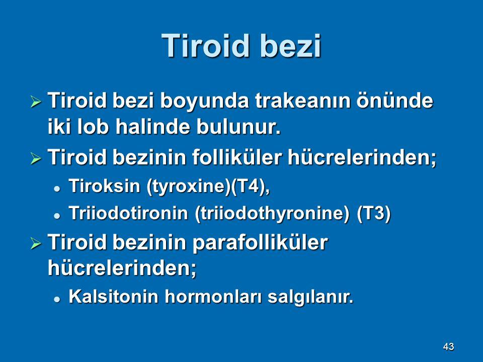 Tiroid bezi Tiroid bezi boyunda trakeanın önünde iki lob halinde bulunur. Tiroid bezinin folliküler hücrelerinden;
