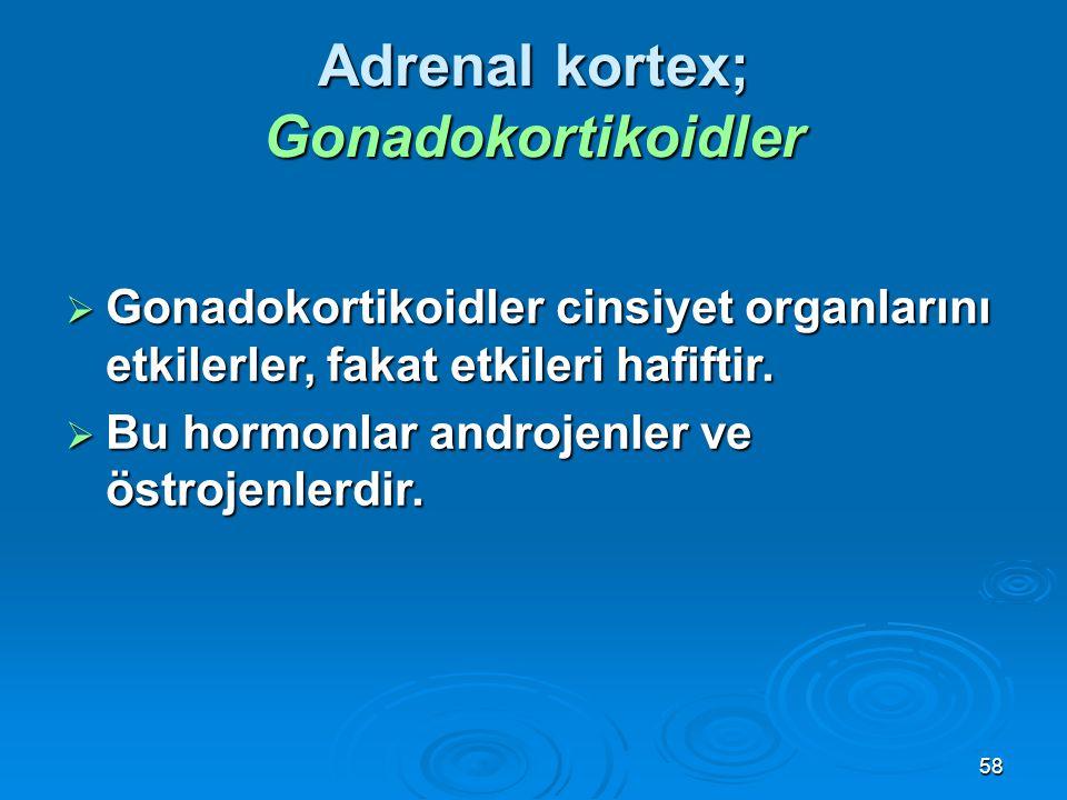 Adrenal kortex; Gonadokortikoidler
