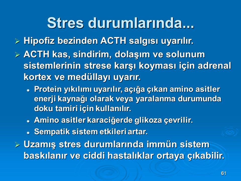 Stres durumlarında... Hipofiz bezinden ACTH salgısı uyarılır.