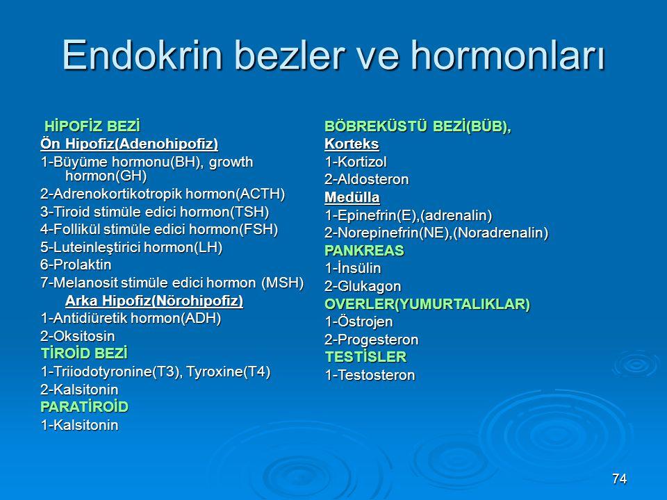 Endokrin bezler ve hormonları