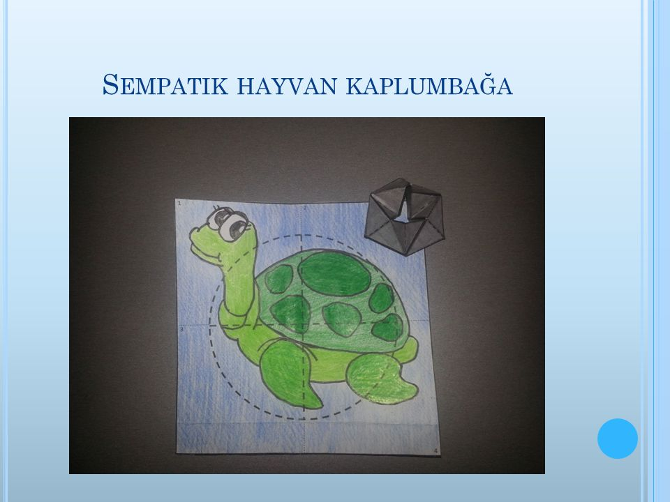 Sempatik hayvan kaplumbağa