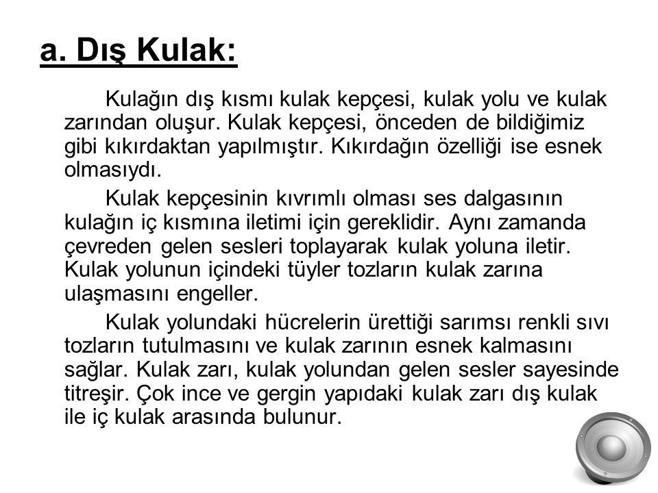 a. Dış Kulak:
