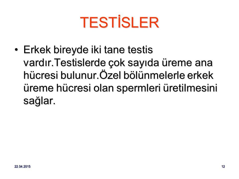 TESTİSLER
