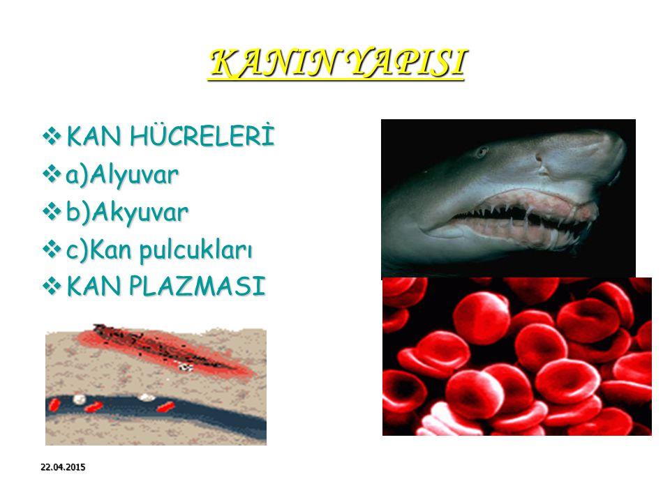 KANIN YAPISI KAN HÜCRELERİ a)Alyuvar b)Akyuvar c)Kan pulcukları
