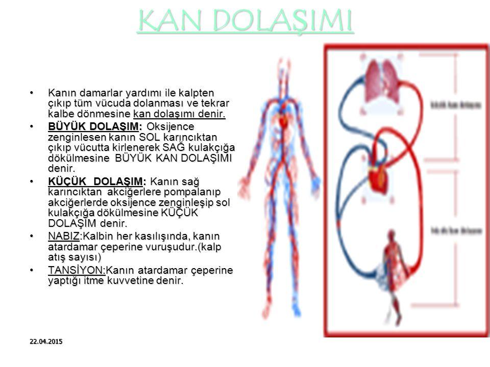 KAN DOLAŞIMI Kanın damarlar yardımı ile kalpten çıkıp tüm vücuda dolanması ve tekrar kalbe dönmesine kan dolaşımı denir.