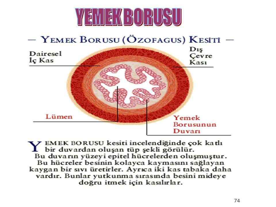 YEMEK BORUSU 74