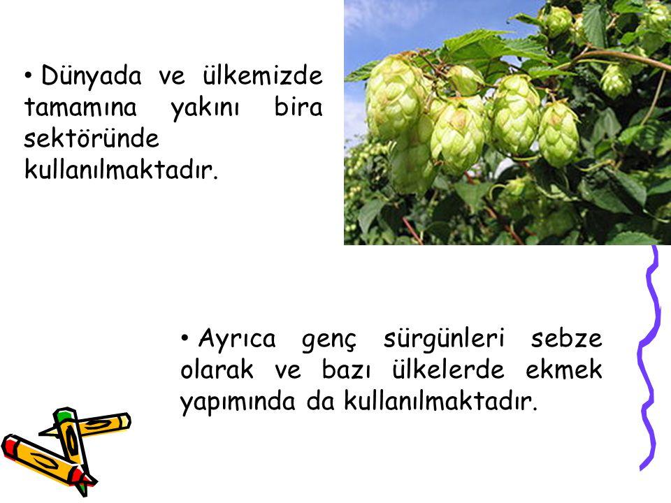Dünyada ve ülkemizde tamamına yakını bira sektöründe kullanılmaktadır.