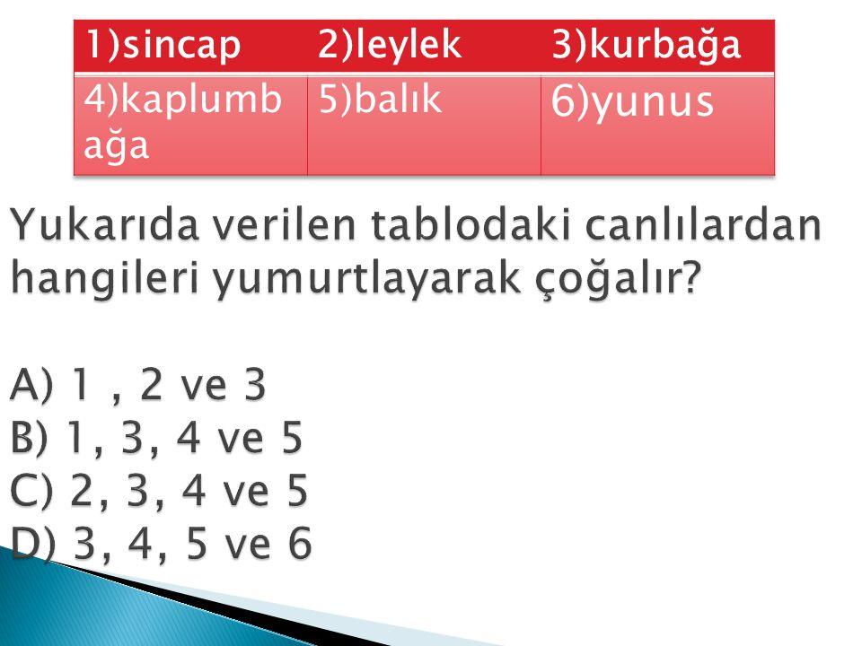 1)sincap 2)leylek. 3)kurbağa. 4)kaplumbağa. 5)balık. 6)yunus.
