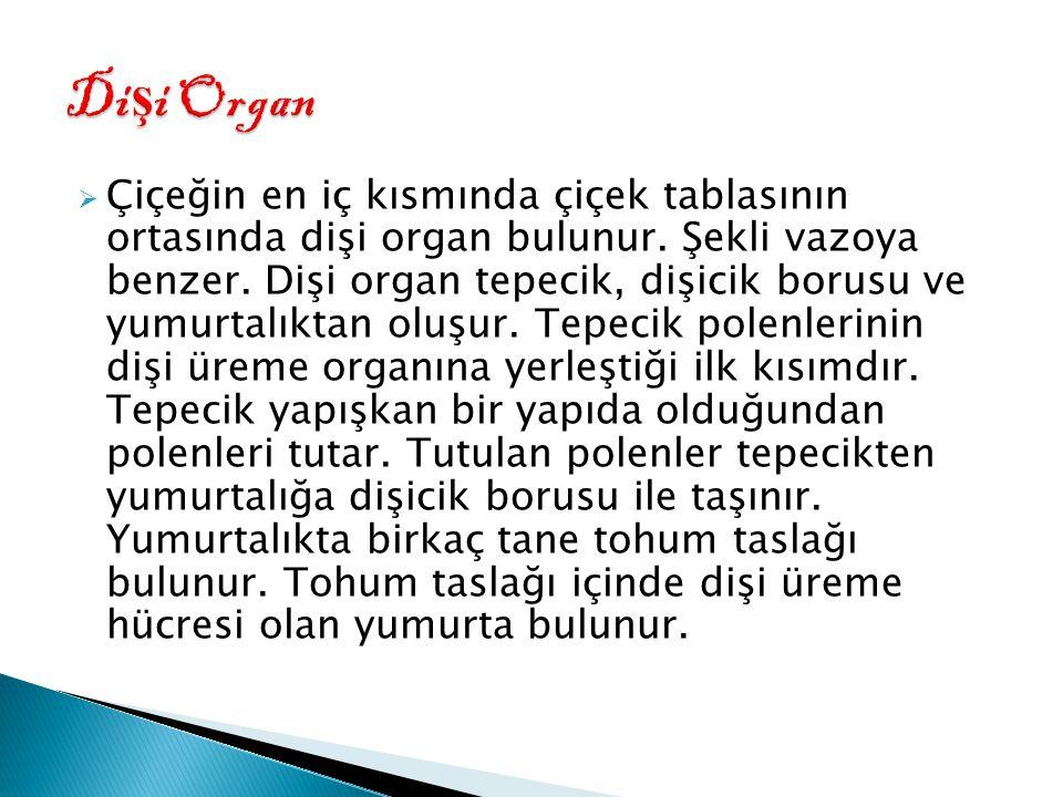 Dişi Organ