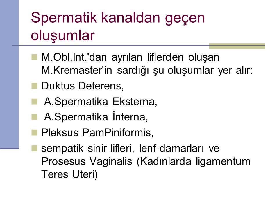 Spermatik kanaldan geçen oluşumlar