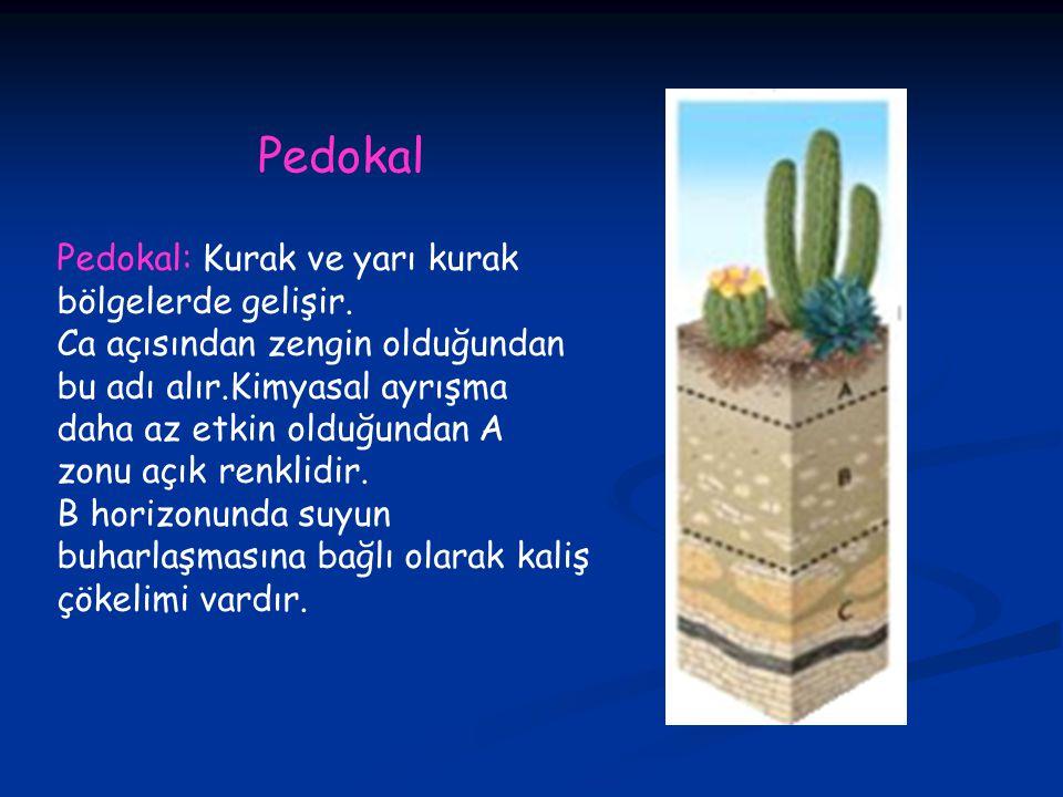 Pedokal Pedokal: Kurak ve yarı kurak bölgelerde gelişir.