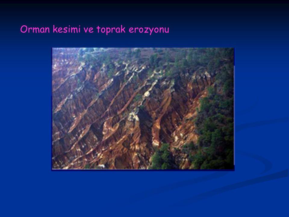 Orman kesimi ve toprak erozyonu
