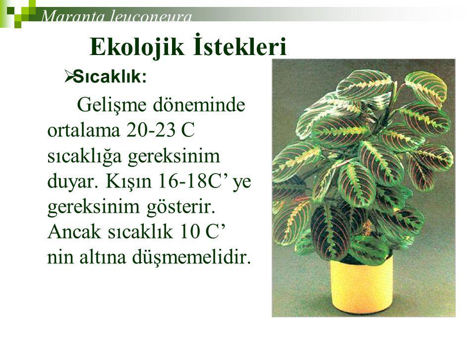 Maranta leuconeura Ekolojik İstekleri. Sıcaklık:
