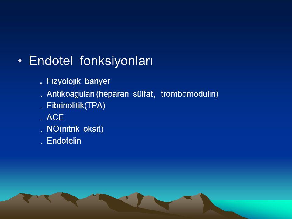 Endotel fonksiyonları . Fizyolojik bariyer