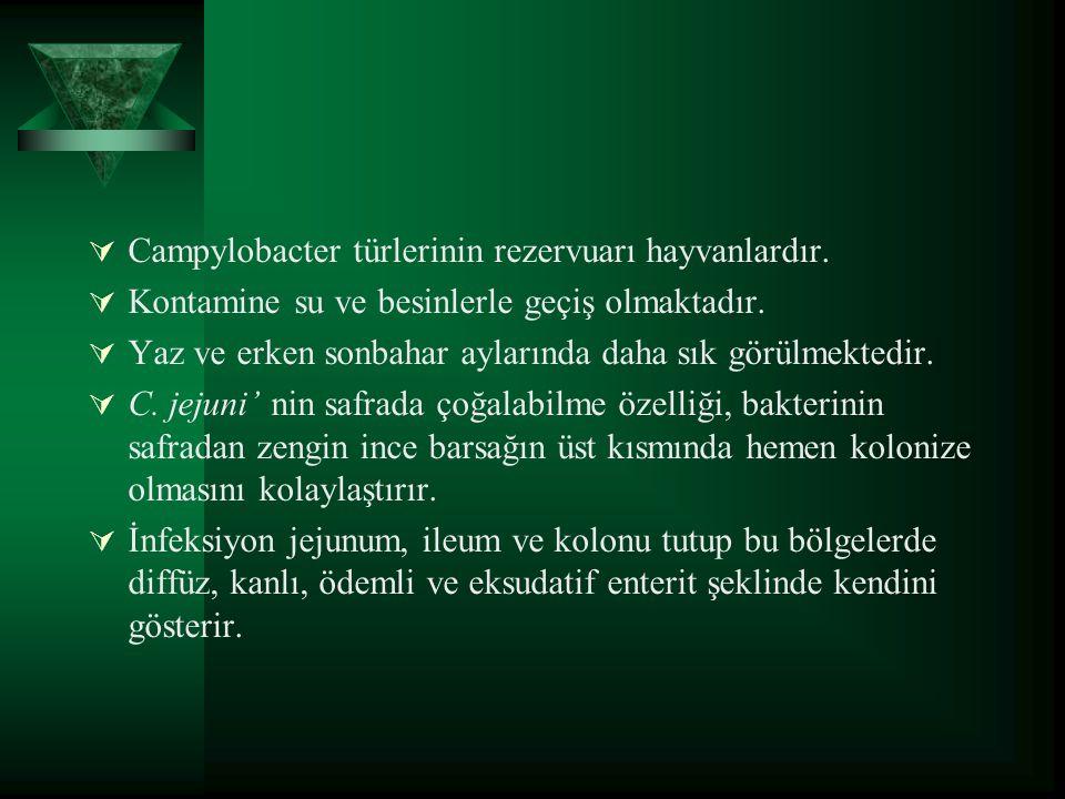 Campylobacter türlerinin rezervuarı hayvanlardır.