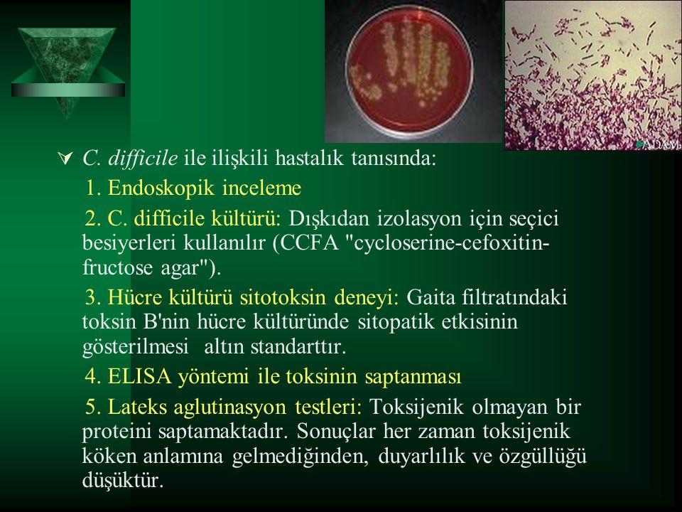 C. difficile ile ilişkili hastalık tanısında: