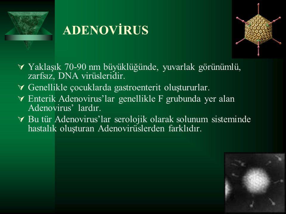 ADENOVİRUS Yaklaşık 70-90 nm büyüklüğünde, yuvarlak görünümlü, zarfsız, DNA virüsleridir. Genellikle çocuklarda gastroenterit oluştururlar.