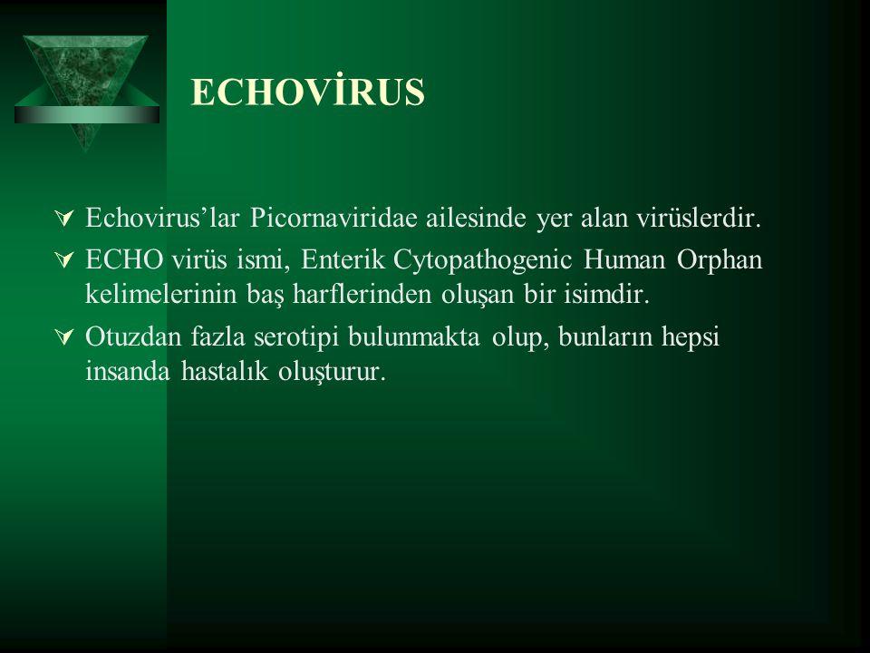 ECHOVİRUS Echovirus'lar Picornaviridae ailesinde yer alan virüslerdir.