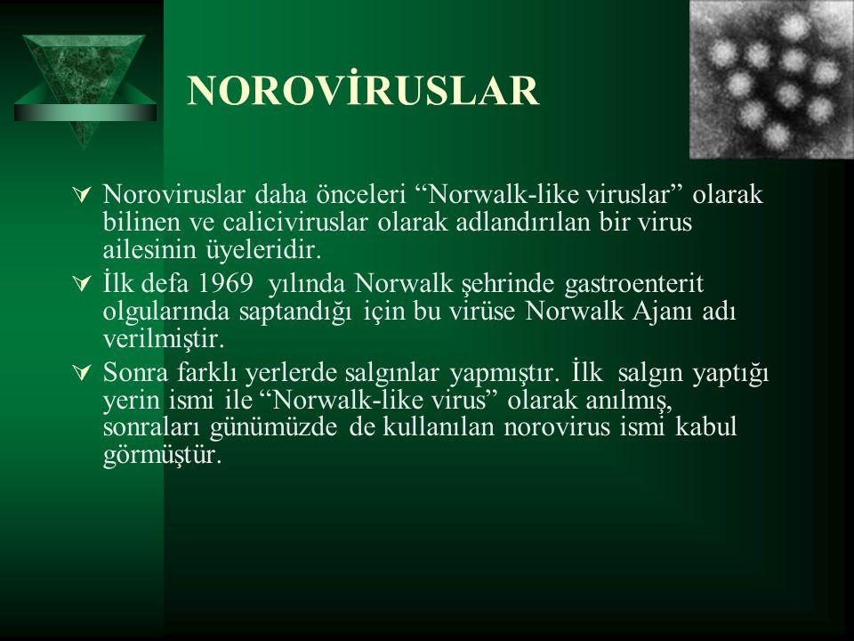 NOROVİRUSLAR Noroviruslar daha önceleri Norwalk-like viruslar olarak bilinen ve caliciviruslar olarak adlandırılan bir virus ailesinin üyeleridir.