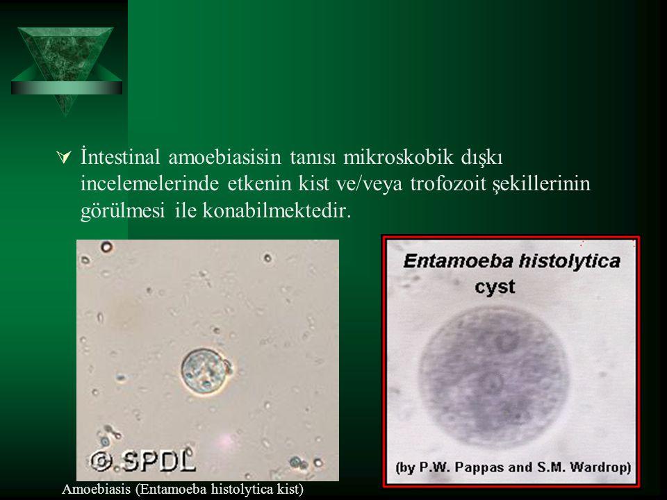 İntestinal amoebiasisin tanısı mikroskobik dışkı incelemelerinde etkenin kist ve/veya trofozoit şekillerinin görülmesi ile konabilmektedir.