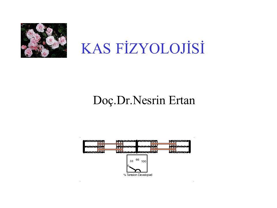 KAS FİZYOLOJİSİ Doç.Dr.Nesrin Ertan