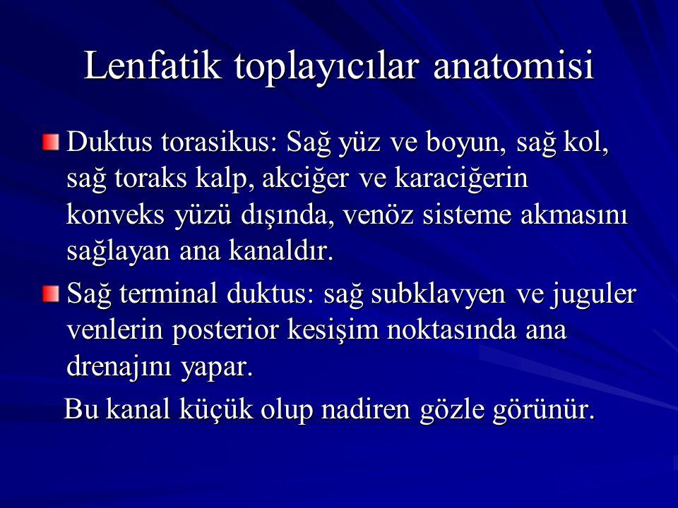 Lenfatik toplayıcılar anatomisi