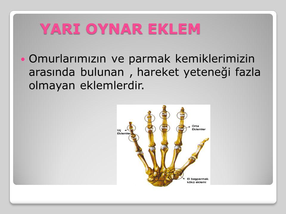 YARI OYNAR EKLEM Omurlarımızın ve parmak kemiklerimizin arasında bulunan , hareket yeteneği fazla olmayan eklemlerdir.