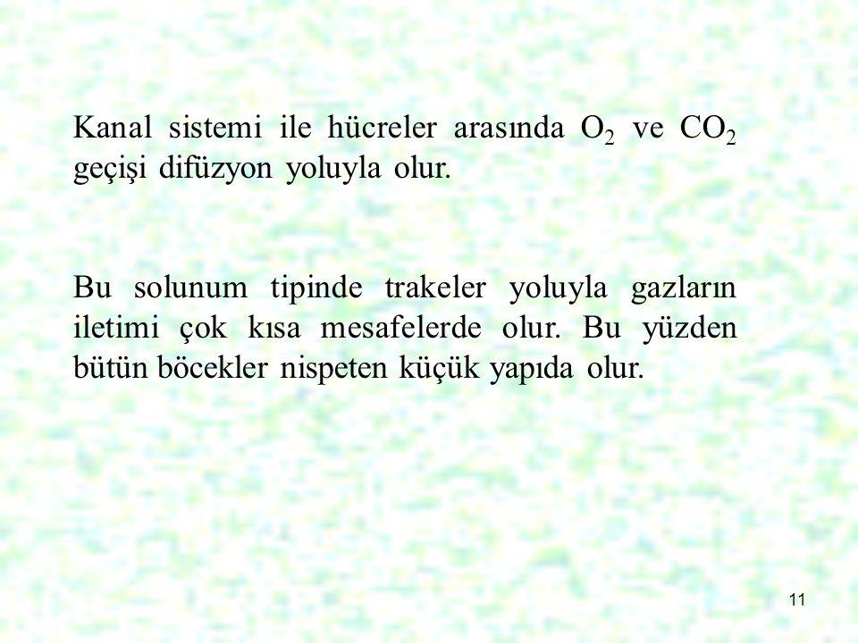 Kanal sistemi ile hücreler arasında O2 ve CO2 geçişi difüzyon yoluyla olur.