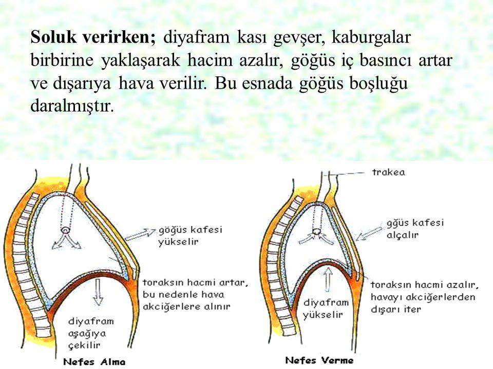 Soluk verirken; diyafram kası gevşer, kaburgalar birbirine yaklaşarak hacim azalır, göğüs iç basıncı artar ve dışarıya hava verilir.