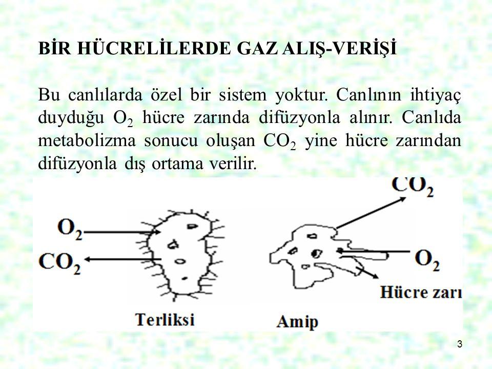 BİR HÜCRELİLERDE GAZ ALIŞ-VERİŞİ