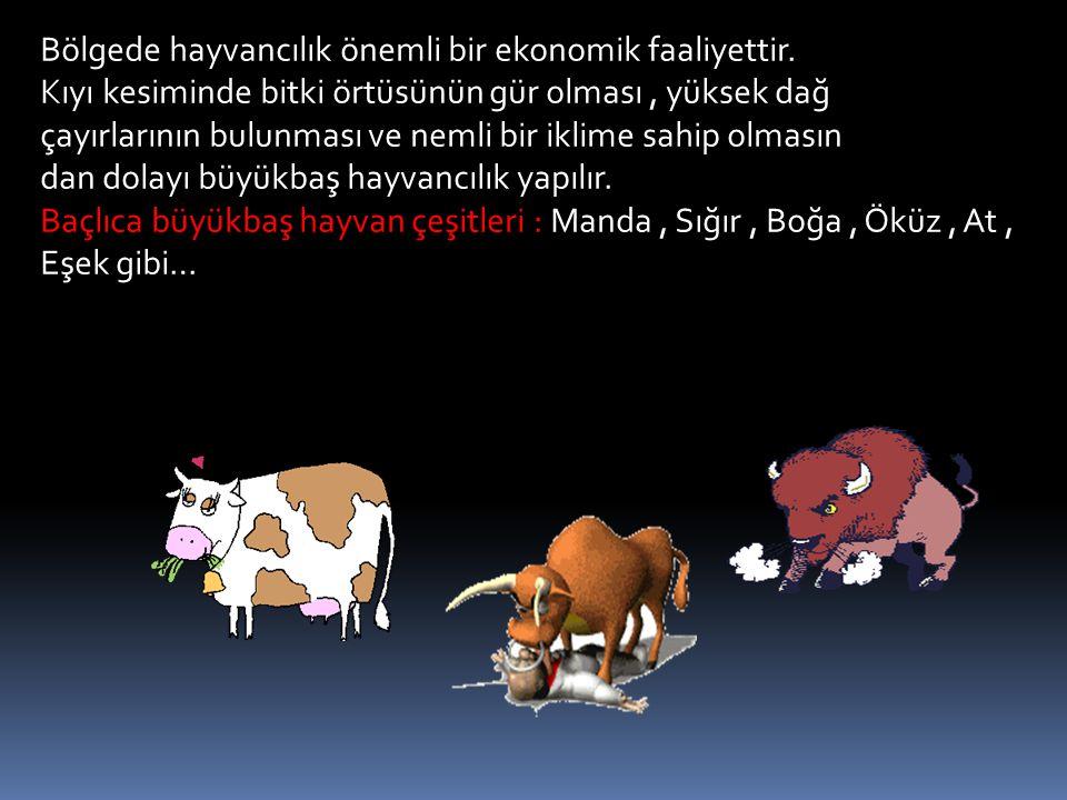 Bölgede hayvancılık önemli bir ekonomik faaliyettir.