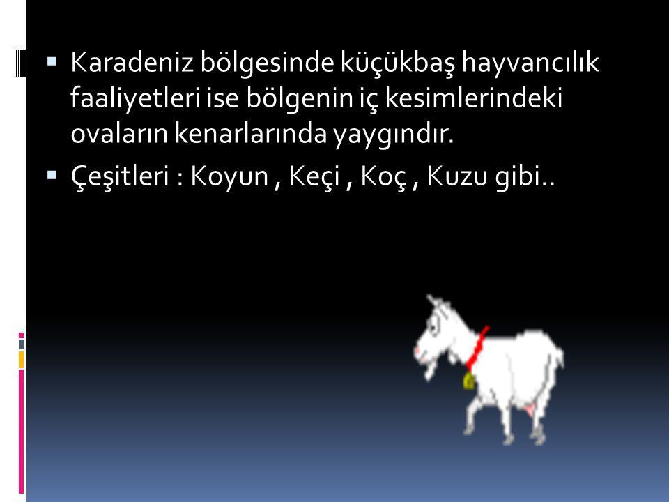 Karadeniz bölgesinde küçükbaş hayvancılık faaliyetleri ise bölgenin iç kesimlerindeki ovaların kenarlarında yaygındır.