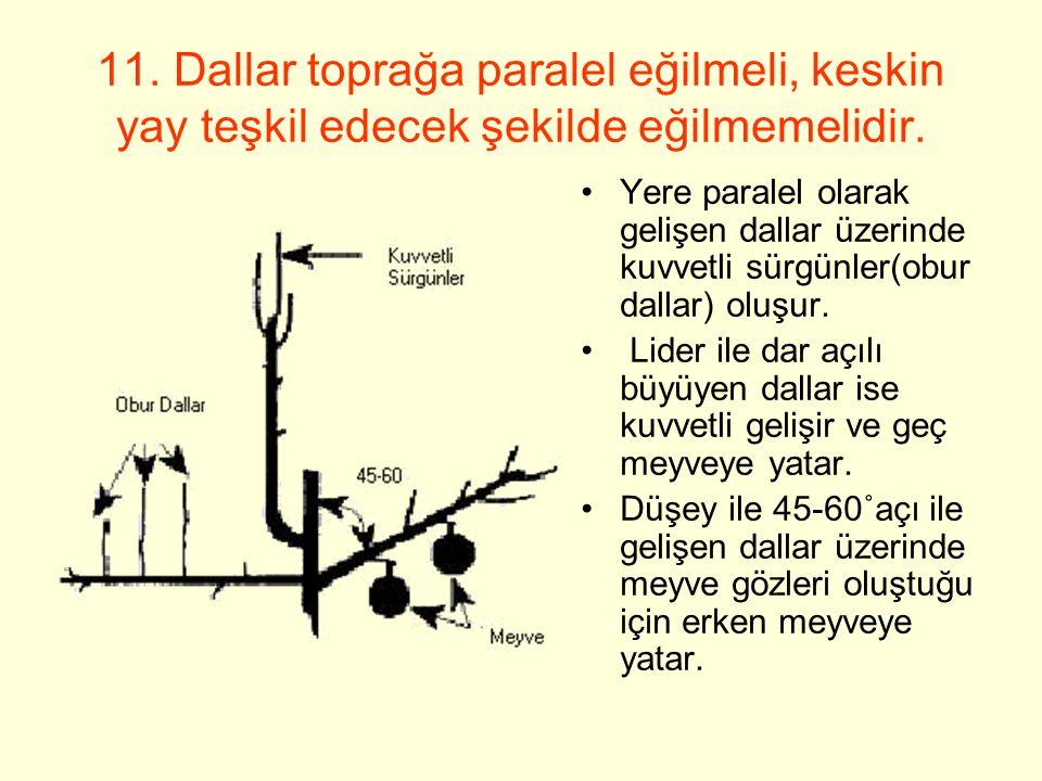 11. Dallar toprağa paralel eğilmeli, keskin yay teşkil edecek şekilde eğilmemelidir.