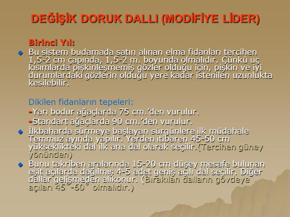 DEĞİŞİK DORUK DALLI (MODİFİYE LİDER)