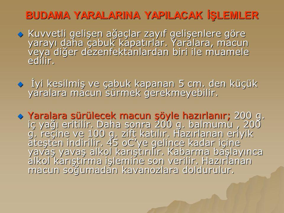 BUDAMA YARALARINA YAPILACAK İŞLEMLER