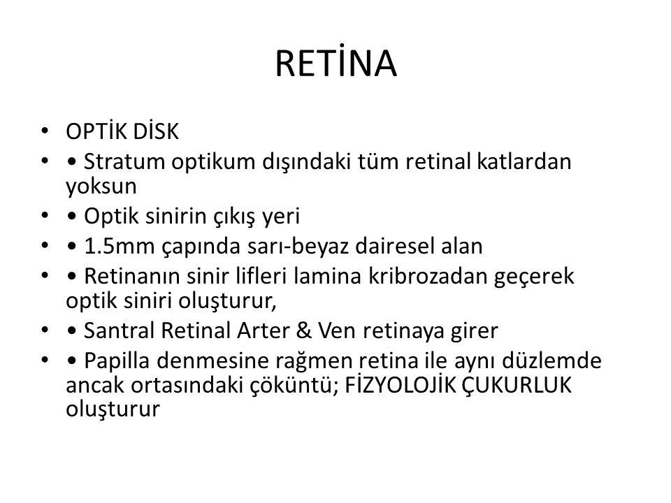 RETİNA OPTİK DİSK. • Stratum optikum dışındaki tüm retinal katlardan yoksun. • Optik sinirin çıkış yeri.