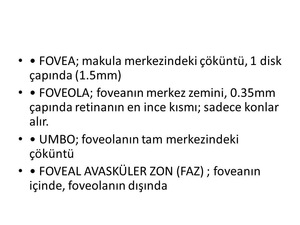 • FOVEA; makula merkezindeki çöküntü, 1 disk çapında (1.5mm)
