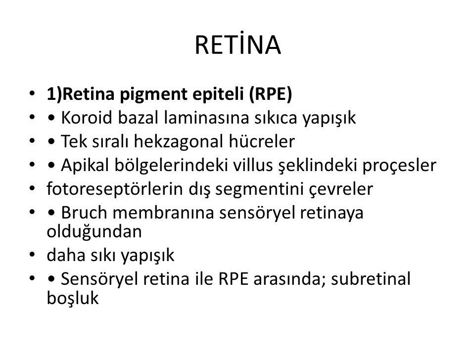 RETİNA 1)Retina pigment epiteli (RPE)