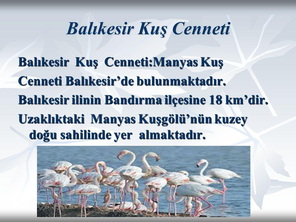 Balıkesir Kuş Cenneti Balıkesir Kuş Cenneti:Manyas Kuş