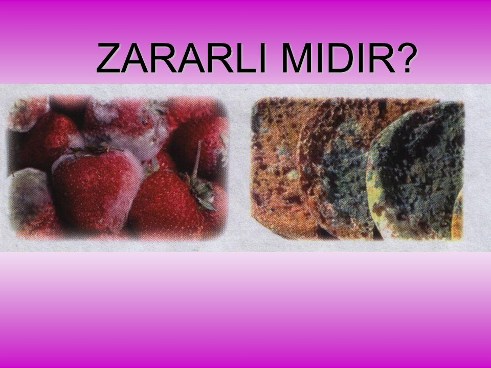 ZARARLI MIDIR