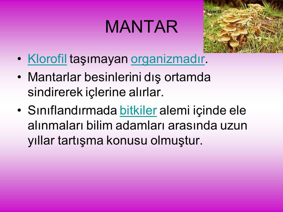 MANTAR Klorofil taşımayan organizmadır.
