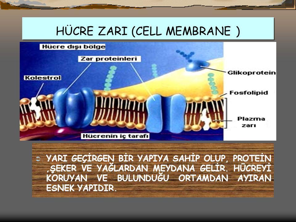 HÜCRE ZARI (CELL MEMBRANE )
