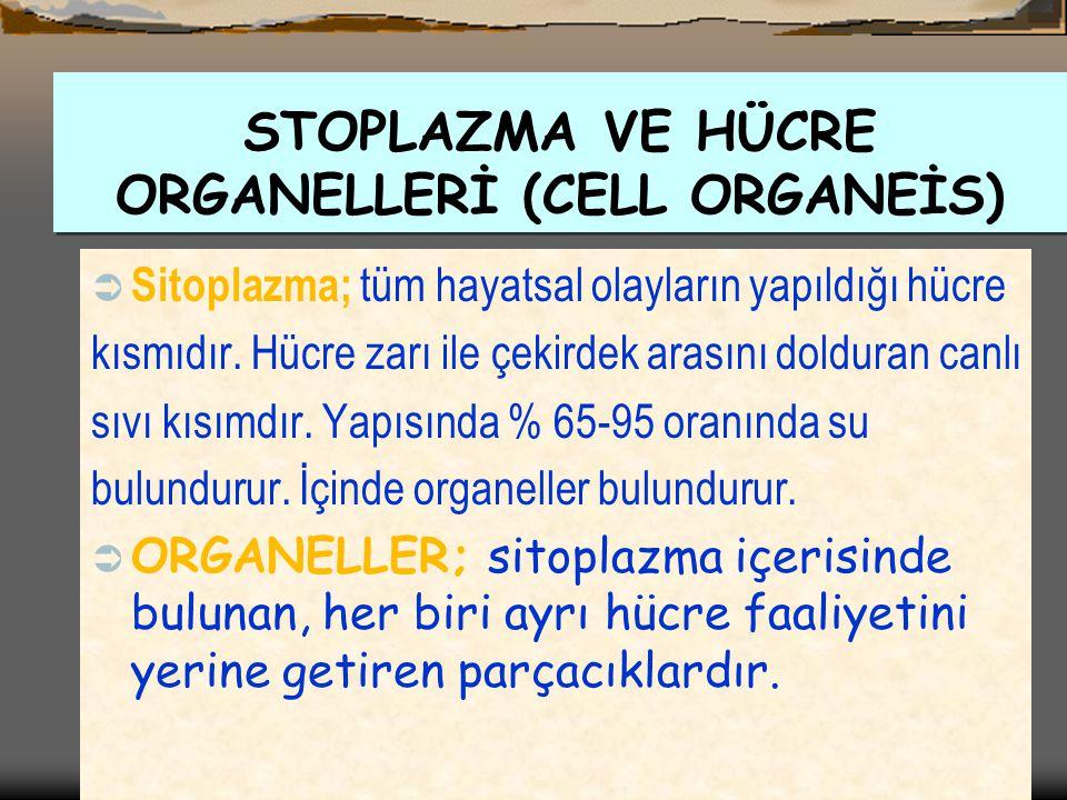 STOPLAZMA VE HÜCRE ORGANELLERİ (CELL ORGANEİS)