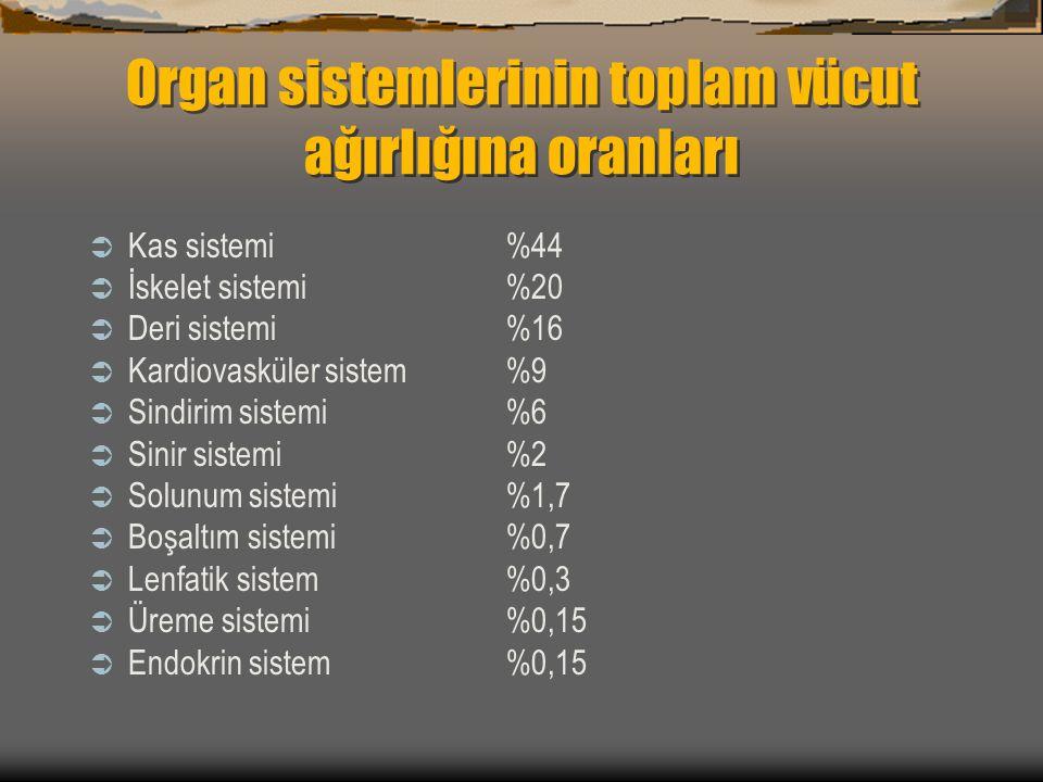 Organ sistemlerinin toplam vücut ağırlığına oranları