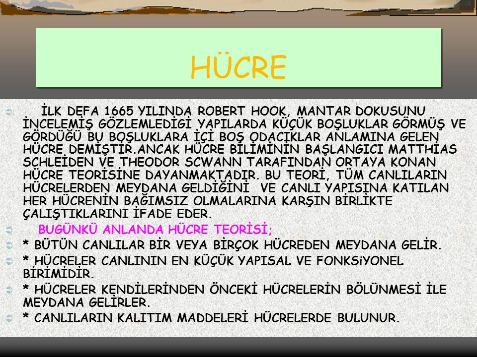 HÜCRE BUGÜNKÜ ANLANDA HÜCRE TEORİSİ;