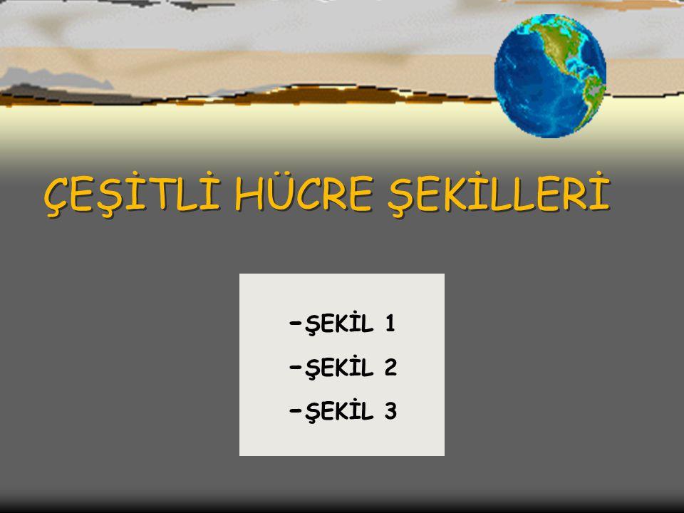 ÇEŞİTLİ HÜCRE ŞEKİLLERİ