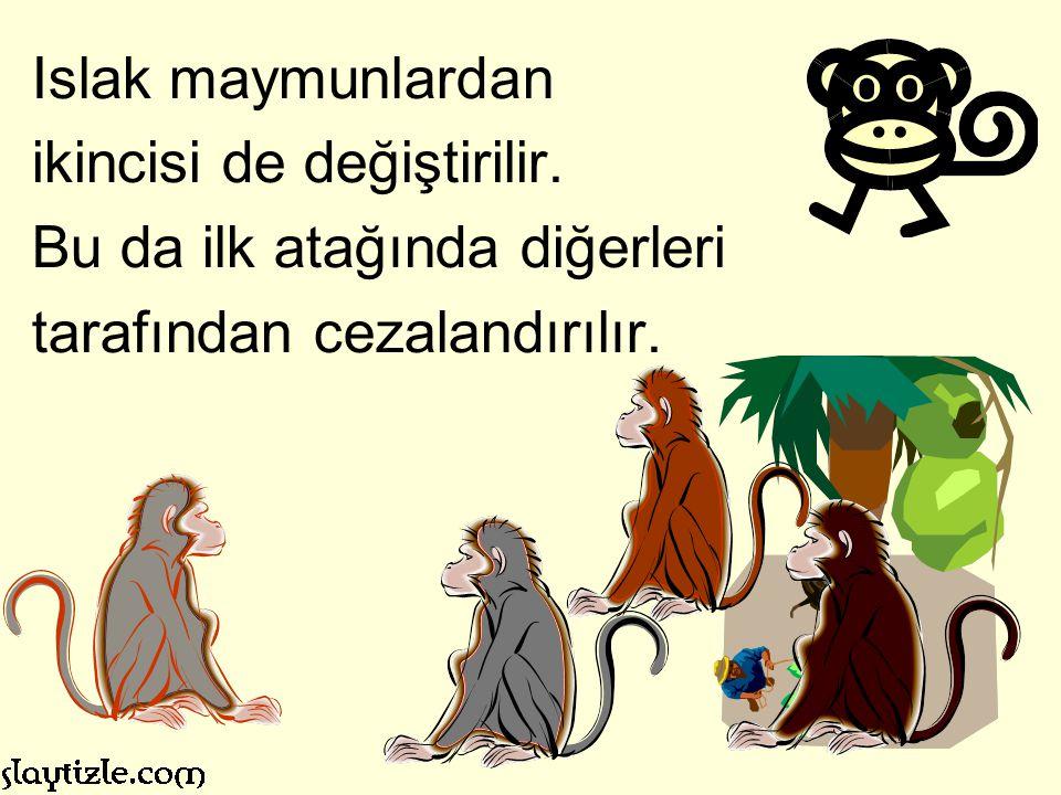 Islak maymunlardan ikincisi de değiştirilir