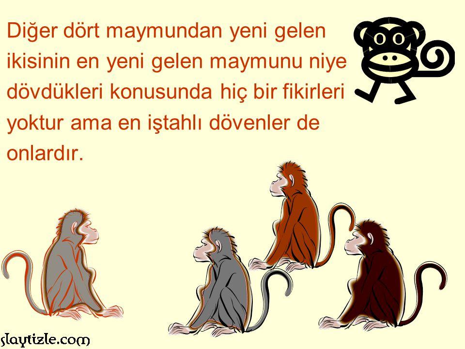 Diğer dört maymundan yeni gelen ikisinin en yeni gelen maymunu niye dövdükleri konusunda hiç bir fikirleri yoktur ama en iştahlı dövenler de onlardır.