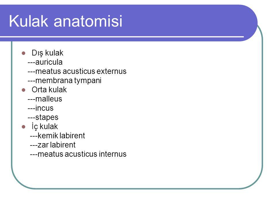 Kulak anatomisi Dış kulak ---auricula ---meatus acusticus externus
